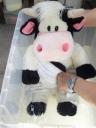 牛さんのぬいぐるみマイクロバブルにクリーニング1